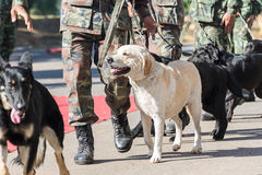 Training dogs of war. Army Soldier with dog, Training dogs of war Royalty Free Stock Images
