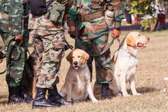 Training Dogs of War Stock Photo