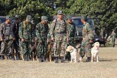 Training Dogs of War Stock Image