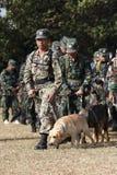 Training Dogs of War Stock Photos