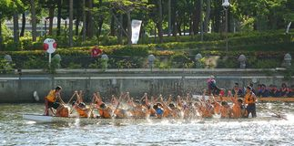 Training for the Dragon Boat Races Stock Photography