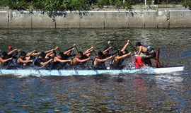 Training for the Dragon Boat Races Stock Image