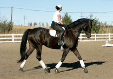 Training Dressage. Riding horse in arena working in Dressage Royalty Free Stock Photos