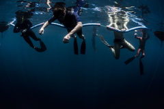 Training of freedivers Stock Photography