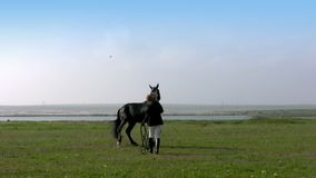 Training a horse. Summer. Steppe. Girl trains the horse stock video