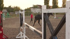 Training of the horse running in a small circle. Girl is teaching a black horse to run around in a circle on a horse farm in the fall at sunset. Slow motion. In stock video footage