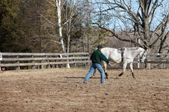 Training a horse to long line Stock Photos