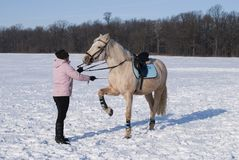 Training horse in winter Stock Photo