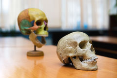 Training the human skull on the table. Royalty Free Stock Photography