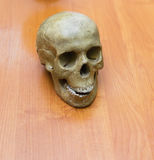 Training the human skull on the table. Stock Image
