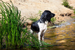 Training a hunting dog on the water Royalty Free Stock Photo
