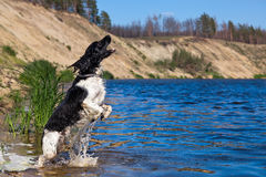 Training a hunting dog on the water Royalty Free Stock Images
