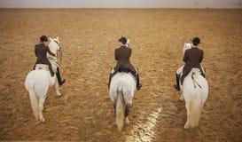 Training of Lipizzaner horses,  Vienna, spanish riding school Royalty Free Stock Photography