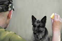 Training A Military Dog Royalty Free Stock Photography