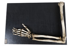 Training model with the bones of the human hand closeup royalty free stock photography