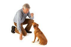 Training obedience. Man is dog training obedience Royalty Free Stock Images