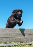 Training of obedience Royalty Free Stock Images