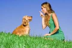 training pet dog. Young woman scolding, training, obedient ,obedience pet dog Stock Image