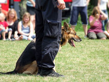 Training a police dog Stock Photo