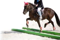 Training the pony Royalty Free Stock Image