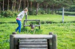 Training puppy dog Stock Photography