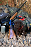 Training a puppy labrador dog about hunting. Preparing for hunting season with a new labrador puppy Royalty Free Stock Photography
