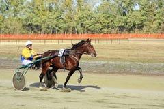Training race racehorse Royalty Free Stock Image
