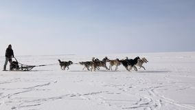 Training sled dogs on a frozen bay