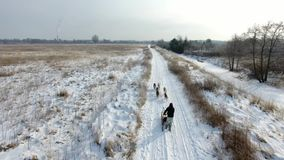 Training sled dogs on rural road in winter. Aerial view stock footage