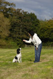 Training Spaniel Stock Photos