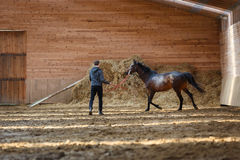 Training of sport horse Stock Photography