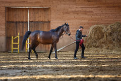Training of sport horse Royalty Free Stock Photos