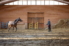 Training of sport horse Stock Images