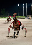 Training trotters race in hippodrome Stock Image