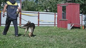 Training of working dog outdoors stock footage