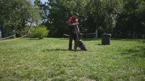 Training of working dog outdoors stock video
