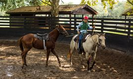 Training a young race horse in florida. Breaking a yearling to the saddle as seen at a training facility in ocala Royalty Free Stock Photos