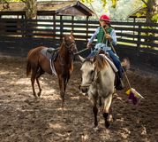 Training a young race horse in florida. Breaking a yearling to the saddle as seen at a training facility in ocala Stock Photography