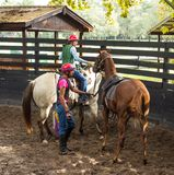 Training a young race horse in florida Stock Image
