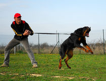 Trainingshund Stockbild