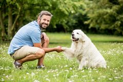 trainning或驯服金毛猎犬的人 免版税图库摄影