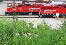 Trains at the Canadian Pacific Railway in Milwaukee. Trains waiting to be loaded at the crossing along the Pacific Railway in Milwaukee , Wisconsin stock photo