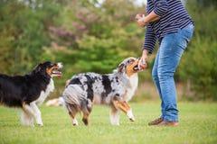 Trains de femme avec deux chiens Image libre de droits