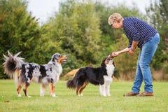 Trains de femme avec deux chiens Photo libre de droits