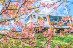 Trains run through the cherry tree Stock Photo
