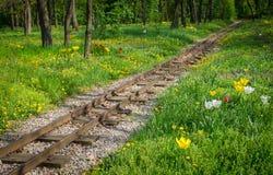 Traintracks через романтичный лес Стоковые Изображения RF