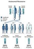 Trait héréditaire récessif Autosomal illustration libre de droits