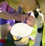 Traite d'une vache Image libre de droits