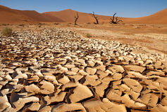 Traite dans le désert Image libre de droits