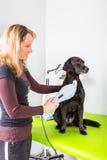 Traitement de chien images stock